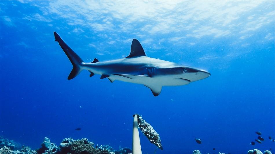 Un hombre muere por un ataque de tiburón en una playa australiana
