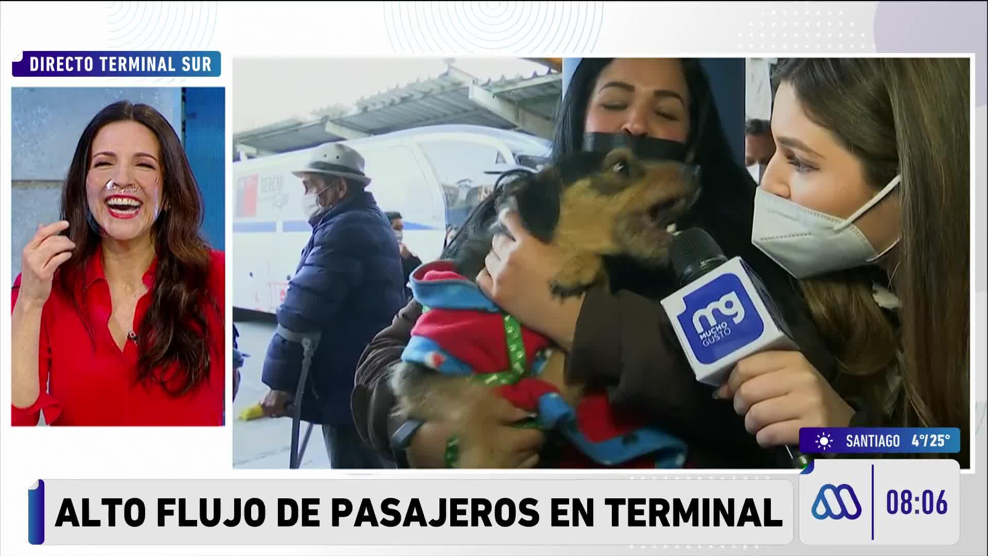 El momento del ataque del perro