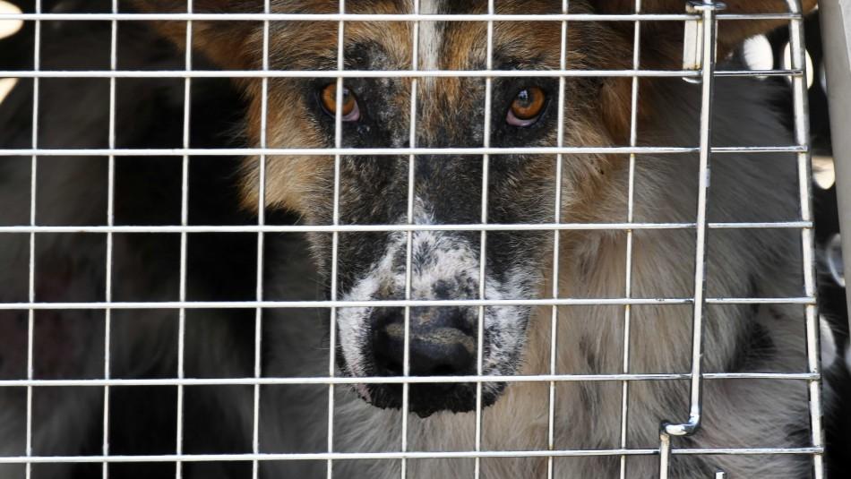Hombre es condenado a 4 años de presidio por maltrato animal y se le prohíbe a perpetuidad la tenencia de mascotas