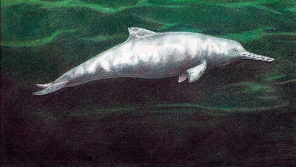 Descubren una nueva especie de delfín que vivió hace 7 millones de años