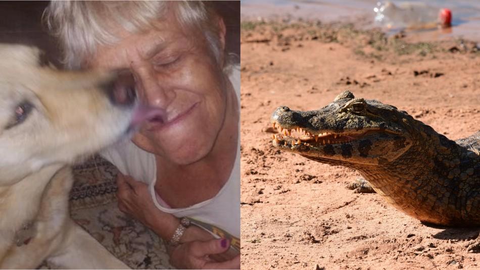 Adulta mayor salva a su perro saltando sobre un caimán: