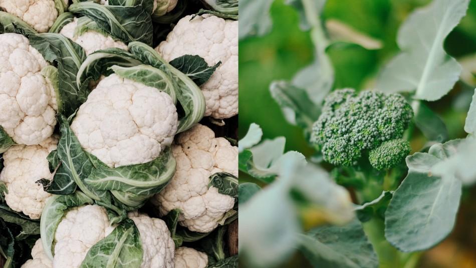 Más allá del color: ¿En qué se diferencian el brócoli y la coliflor?