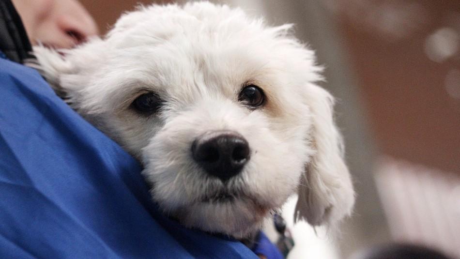 Presentan proyecto para dar un día libre a quienes sufran la muerte de su mascota